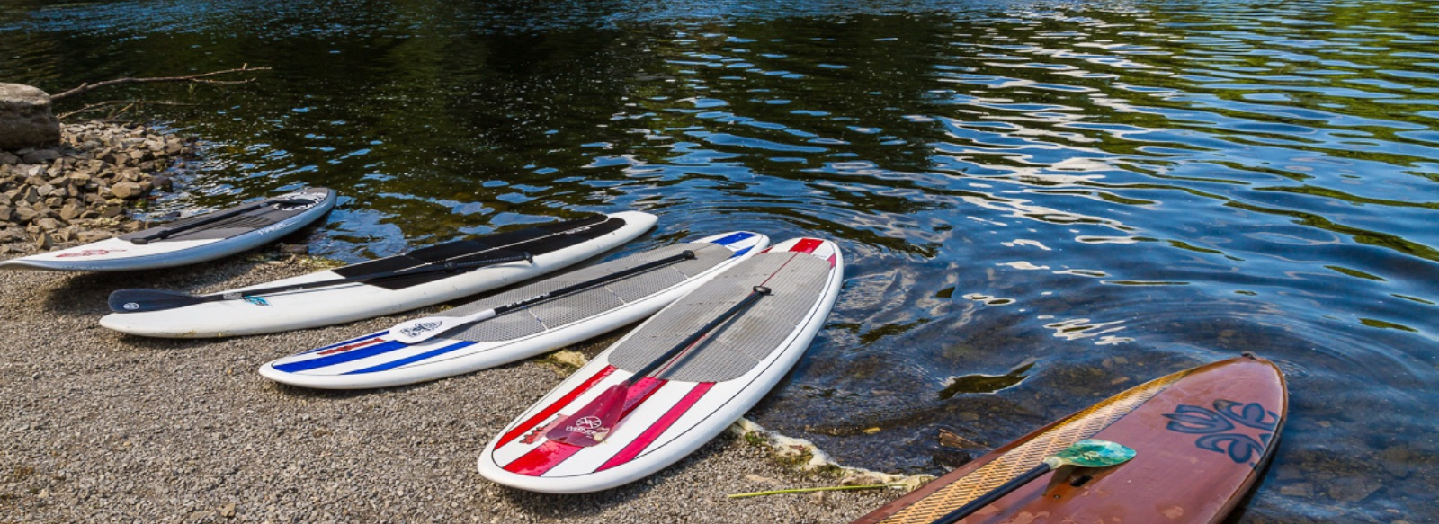 Paddleboards sitting on the shore of a lake
